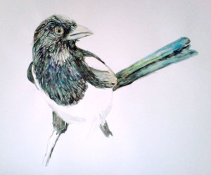 "My first magpie sketch 12"" x 18"""