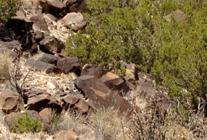 Deer Petroglyph near the Rio Grande