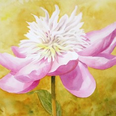 Pink Peony watercolor available as print in three sizes.