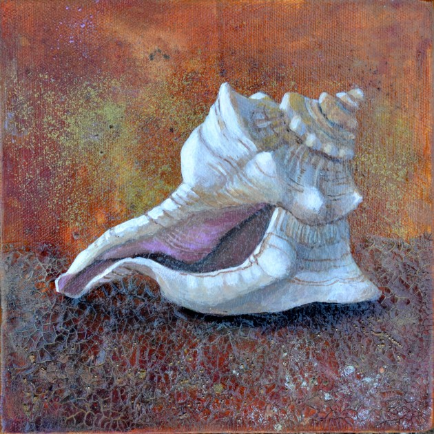 Conch © liza myers 10